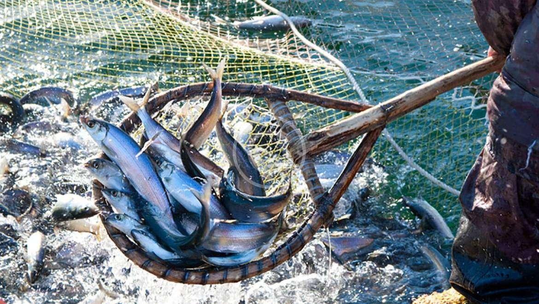 Vis als voeding vd wereld
