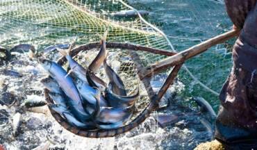 Vis als voeding voor de wereld